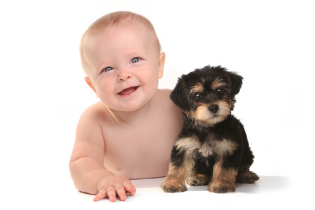 Cute Baby Boy With His Pet Teacup Yorkie Puppy Foto de archivo