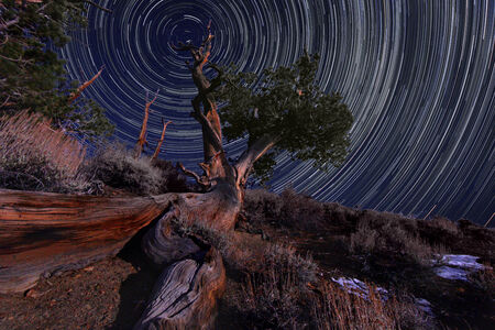 astral: Vortex Night Exposure Star Trails of the Sky in Bristlecone Pines California