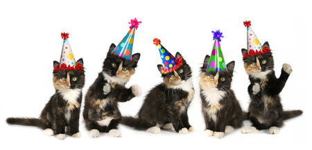 Kittens on a White Background With Birthday Hats Фото со стока