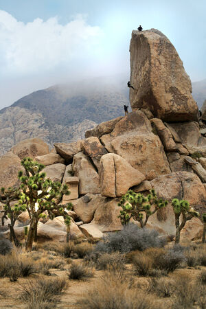 joshua tree national park: Campers Repelling and Rock Climbing in Joshua Tree National Park Stock Photo