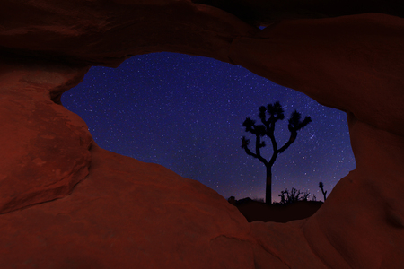 joshua tree national park: Star Trails in Joshua Tree National Park Stock Photo