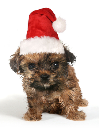 stitting: Sitting Puppy Dog With Cute Expression and Santa Hat