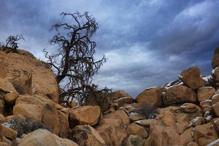 Joshua Tree National Park After Snow Storm