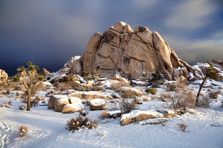 joshua: Joshua Tree National Park After Snow Storm