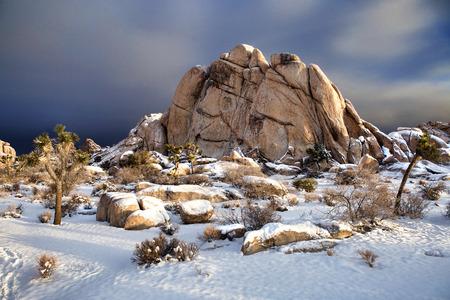 winter park: Joshua Tree National Park After Snow Storm