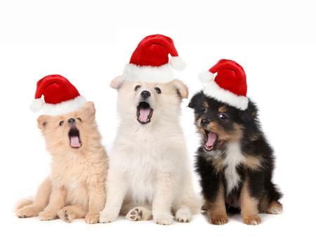 Zingen kerst Puppies dragen Santa hoeden op Wit