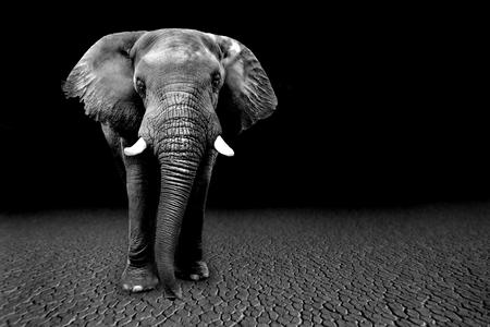 Bellas imágenes de los elefantes africanos en África Foto de archivo - 66583660