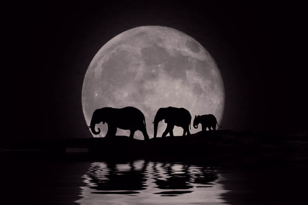 desert landscape: Silhouette of African Elephants at Moon Rise Stock Photo