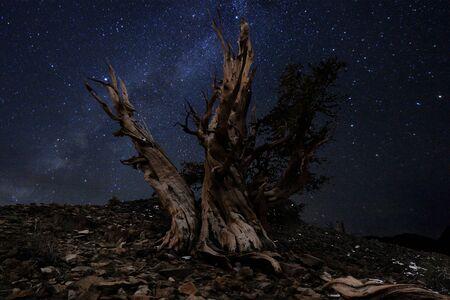 bristlecone: Illuminous Light Painted Landscape of  Stars in Bristlecone Pines