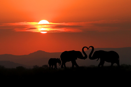 kenya: Silhouette of African Elephants at Sunset