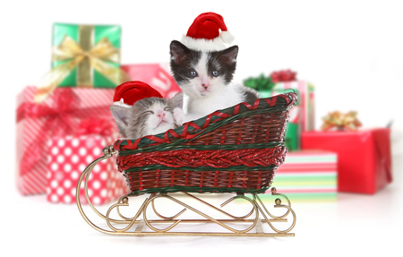 cute kittens: Cute Adorable Kittens Surrounded by Christmas Gifts in Sleigh Stock Photo