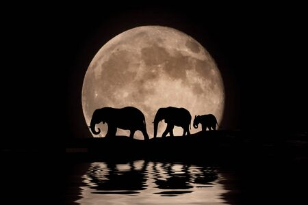 kenya: Three Elephants in the Moonlight Silhouette Stock Photo