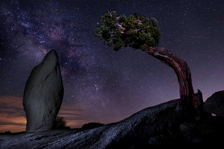 joshua tree national park: Milky Way Over a Juniper Tree in Joshua Tree National Park