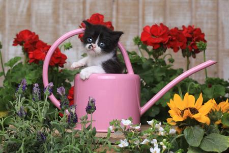 Adorable gatito bebé de 3 semanas de edad en un entorno de jardín Foto de archivo