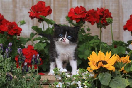 Adorable gatito bebé de 3 semanas de edad en un entorno de jardín