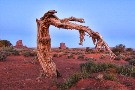 Beautiful Monument Valley Landscape Framed By an Old Tree
