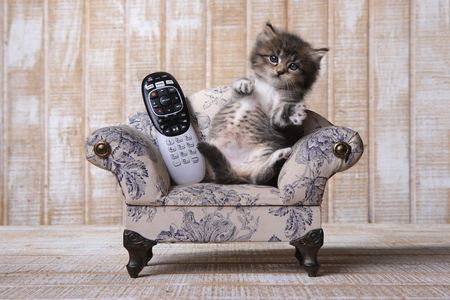 Funny Adorable Kitten Relaxing on Couch With Remote