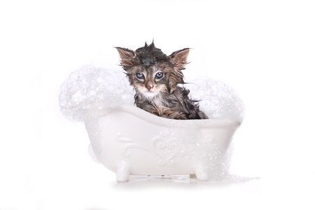 Adorable Dripping Wet Kitten on White