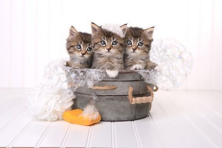 Kittens in Washtub Getting Groomed By Bubble Bath
