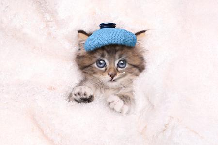 Krijg goed binnenkort kitten dat is ziek