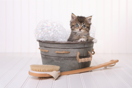 cat grooming: Kitten in Washtub Getting Groomed By Bubble Bath
