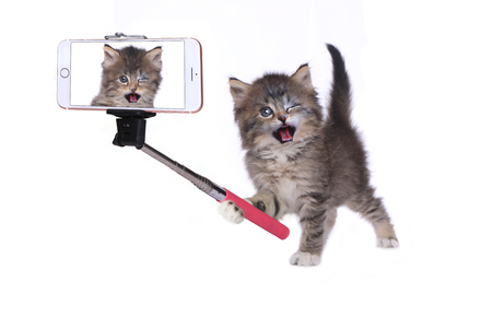 heartwarming: Funny Kitten Taking His Own Photo With Selfie Stick