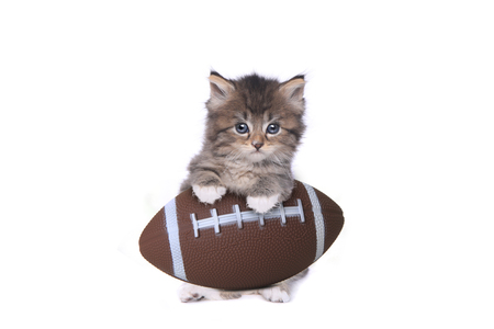 Maincoon Kitten With a Football