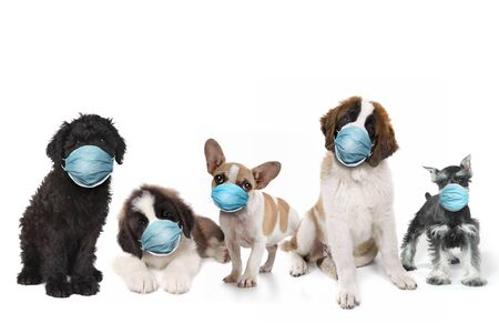 Group of Puppies Wearing Protective Face Masks