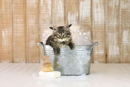 Cute Kitten in a Bathtub With Bubbles