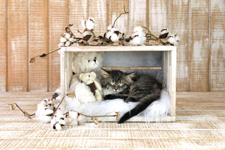 Sleeping Kitten With Teddy Bears and Cotton Sprouts