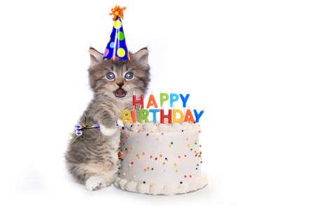 Adorable Kitten on White With Birthday Cake Celebration Фото со стока