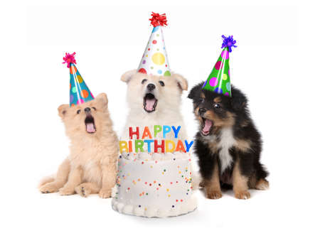 Humorous Puppies Singing Happy Birthday Song With Cake Фото со стока