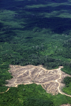 deforestation: Aerial photo of deforestation in East Borneo forest