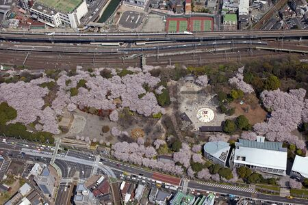 Cherry blossoms in Asukayama Park and Shinkansen and Oji Station