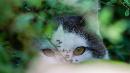 wild cat: The wild cat watching from a safe place in the bushes. Stock Photo