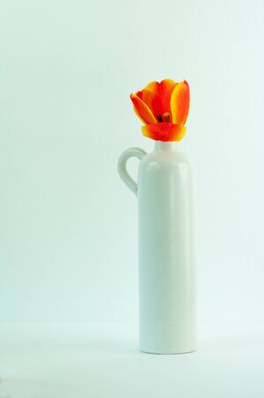 The Tulip in a Nittsjo vase in white