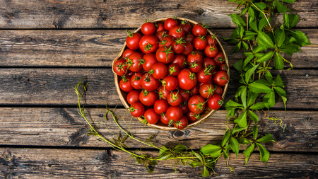 A pottery bowl filled with sunriped tomatoes on a rustic wooden terrace floor surrounded with Virginia creeper Stock Photo