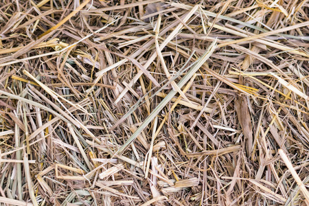 dry rice straw texture and background