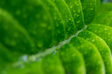 Green leaves of tree with water or rain drops Stock Photo