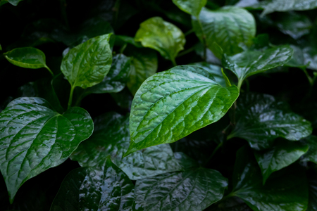 Green leaves of plant in low key Stock Photo