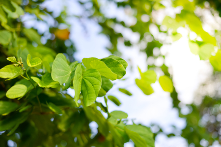 Green leaves of tree with copy space