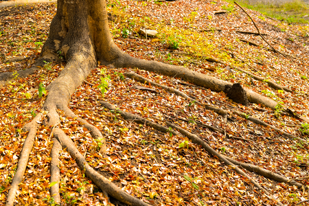 Tree roots in spring season Stock Photo
