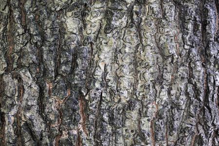 Texture of tree