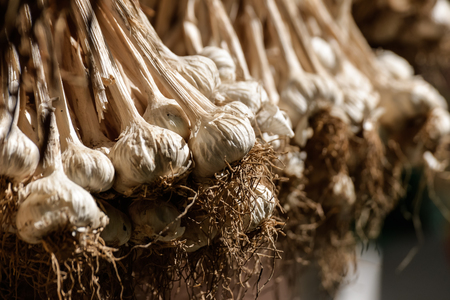 Dry garlic hanging on the bar for cooking Stock Photo