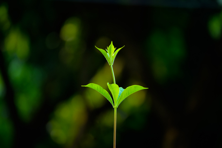 young tree bud with dark background