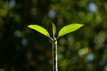 Young green tree leaves bud on the tree trunk with dark background