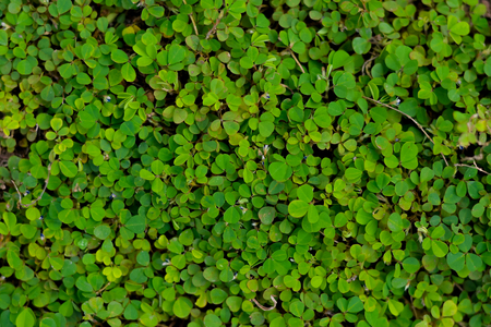 small green plant covered on the ground