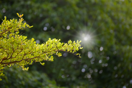 Young leaves or bud of tree with sunlight