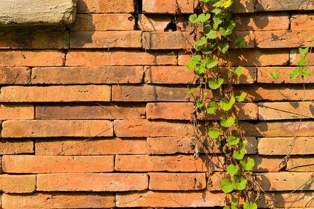 Tree leaves on the brick wall Stock fotó