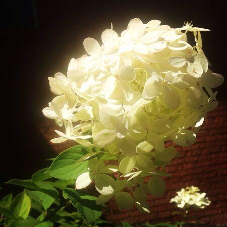 glow: White Flower